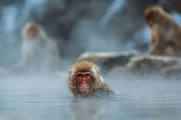 7 Alternative Japanese Destinations - Monkey Park